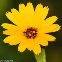 цветы :: АЛЕКСАНДР МИНКОВИЧ