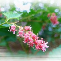 Розовые цветочки :: Nina Yudicheva