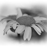Черно-белый вариант гадания.... :: Tatiana Markova