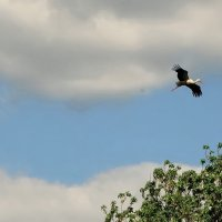 Видим, там, в вышине, летит аист... :: Владимир Гилясев