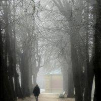 Туманный Петергоф :: Юрий Цыплятников