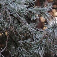 Зимой :: Виктория