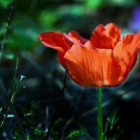 vit5  цветет... :: Vitaly Faiv