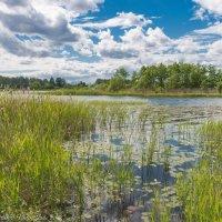 На Лебяжьем озере. :: Виктор Евстратов