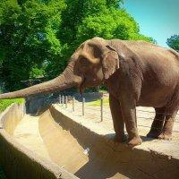 Слон :: Nina Yudicheva