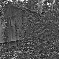 Лесной дом :: Ростислав