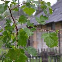 После дождя :: Андрей Козинец