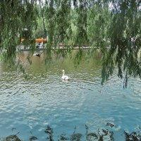 В старом парке. :: Наталья