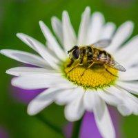 Аэродром для насекомых :: Андрей Куприянов