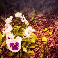 цветы рядом с Краеведческим музеем :: Timofey Chichikov