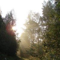Рассвет в лесу :: Анатолий Аверкин