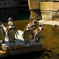 """Пингвины: """" Опять фотоссесия! Улыбаемся!"""" :) :: Nina Yudicheva"""