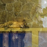 Львята за стеклом :: Aнна Зарубина