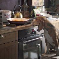 Дежурный по кухне :: Тата Казакова