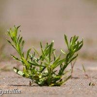 Зеленая корона :: Азат Идиятуллн