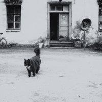 Средства связи и кошка) :: Елизавета Вавилова