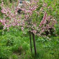 В  этом садике прелестном :: Надежда