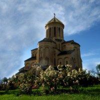 Когда цветут розы :: Наталья Джикидзе (Берёзина)