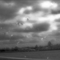 Скоро грянет буря! :: galina bronnikova