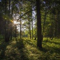 Утро в лесу (слава Богу без мишек) :: Владимир Шустов