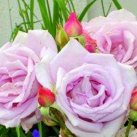 С праздником Святой Троицы! :: Валентина ツ ღ✿ღ