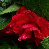 После дождя :: Юлия Ненахова