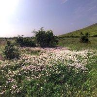 Летние островки цветочной красоты :: viton