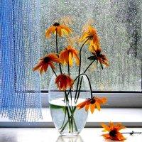 Вчерашние цветы :: Наталья Казанцева