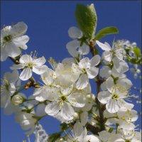 Цветущий май :: lady v.ekaterina