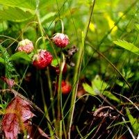 Пахнет лето земляникой спелой... :: Валентина ツ ღ✿ღ