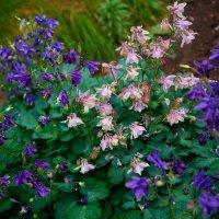 Мои милые цветы :: Ксения