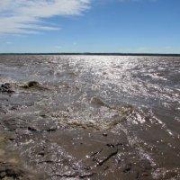 Река Мезень во время прилива ( Мезенский район) :: Александра Карпова