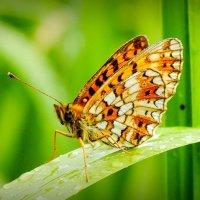 спряталь в траве от дождика :: Александр Прокудин