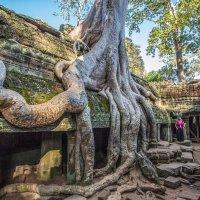 Камбоджа :: Владимир Леликов