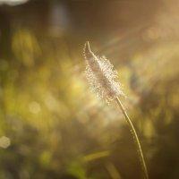 Солнечные нити :: Андрей Михайлин