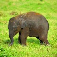 Крошка-слоненок :: Наталья Казакевич