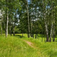 Грибной лес :: Милешкин Владимир Алексеевич