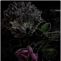 И разливался розы аромат... :: Нина Корешкова