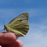 Бабочка :: Марина Егорова