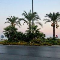 Пальмовый островок :: Светлана