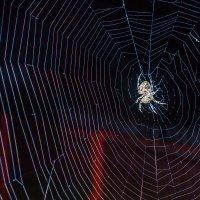 огромный такой паук :: Сергей Масленников