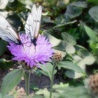 Бабочки . :: Мила Бовкун