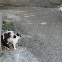 Эй, хозяин, оденьте намордник этому животному :: Андрей Майоров