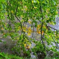 В дождь :: Наталья