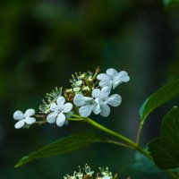 Ой, цветёт калина... :: Николай