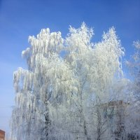 Конечная остановка Зима :: Андрей Осипов
