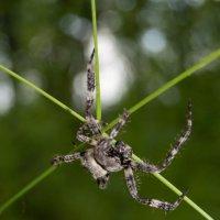 Arachnida 1 :: Мария Букина