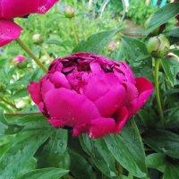 мои любимые цветы :: Galina Demkina