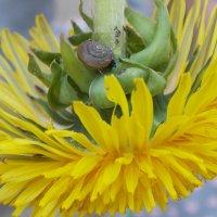 носит одуванчик желтый сарафанчик... :: Galina Demkina