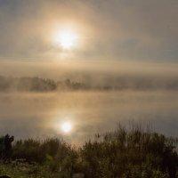 Туманное утро :: Вероника Швец